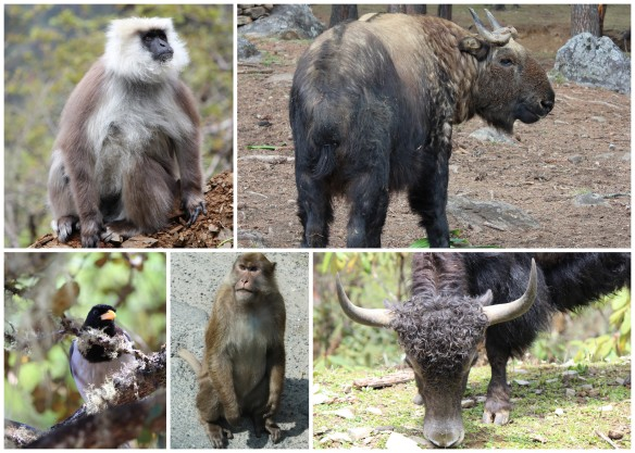 Some of the Bhutan Wildlife